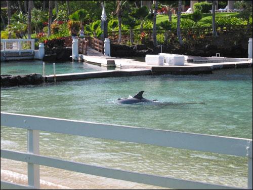 Hawaii Trip 2003 (36)