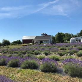 Lockwood Lavander Farm