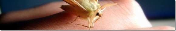 moth, the first compuer bug