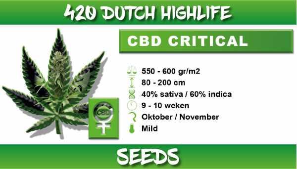 cbd critical