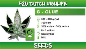 G Glue