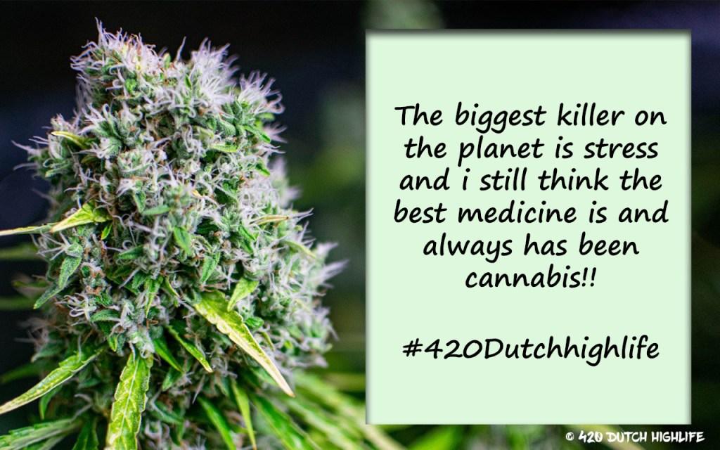 420 dutch highlife cbd