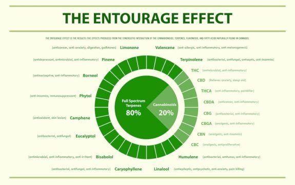 Entourage Effect Cannabis Chart Small 1024x640