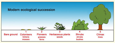You Cant Grow Organic Without The Soil Food Web