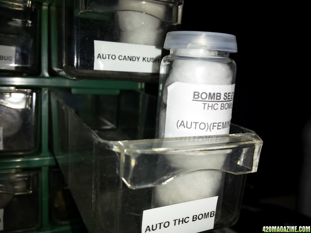 2 Autoflowers Pots Gallon