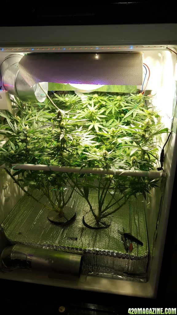 Led Grow Lights Forum