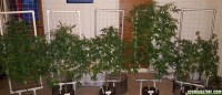 Vertical grow with screens - 400W - Blumats | 420 Magazine