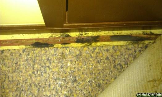 Black Mold On Carpet Tack Strips Lets See Carpet New Design