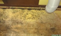 Black Mold Under Carpet In Bat - Carpet Vidalondon