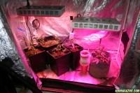 The 4x4 Grow Tent Club | 420 Magazine