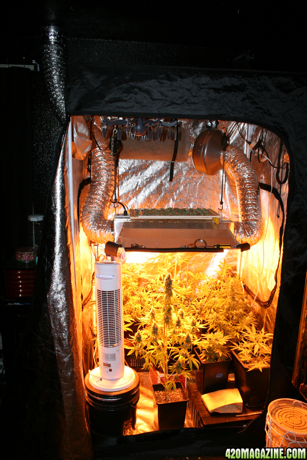 grow room designs with pictures and diagram 2000 ford explorer door the 4x4 tent club 420 magazine