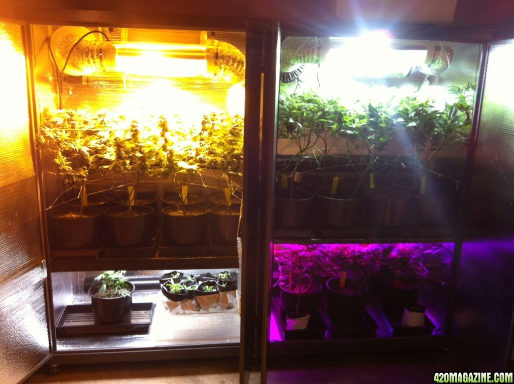 Best indoor grow box  420 Magazine