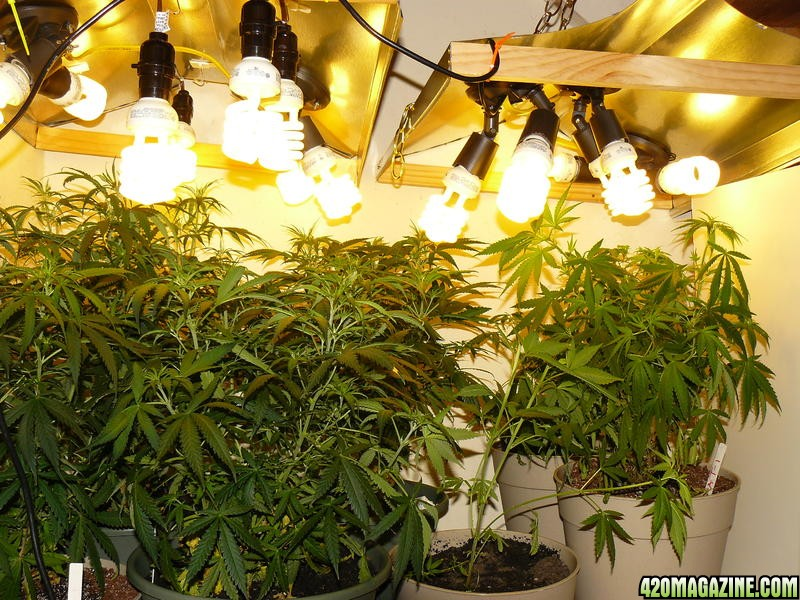 Maximizing Indoor Grow Lighting Effeciency