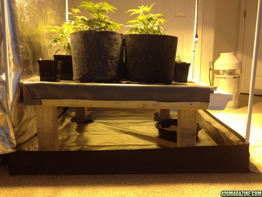 Drain Table For A 4x4 Tent 420 Magazine