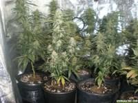 Double j's 4000w hps grow+veg room - Page 4
