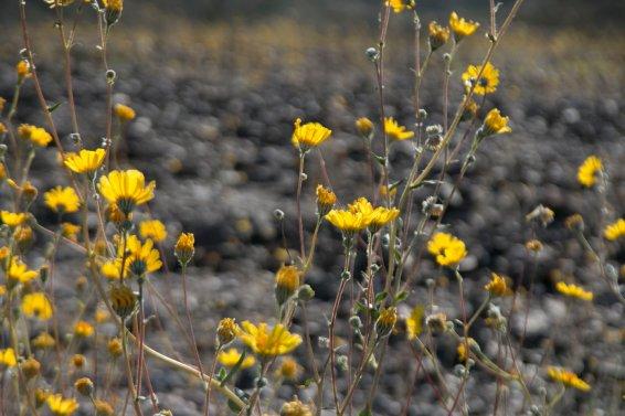 DV Views spring Flowers