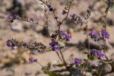DV-Views-spring-Flowers_0107