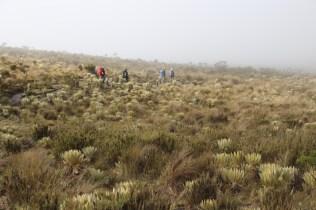 The group treks through the fog.