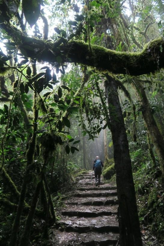 Jordan hikes through the jungle.