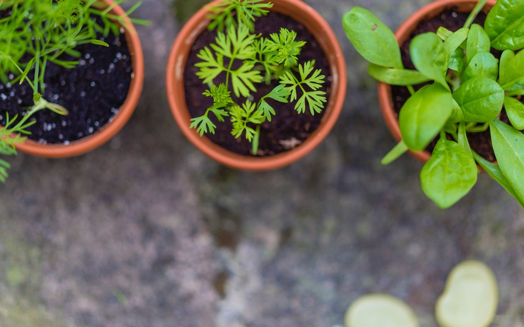 Top Culinary Herbs for Vegans to Grow (Plus 20 recipes)