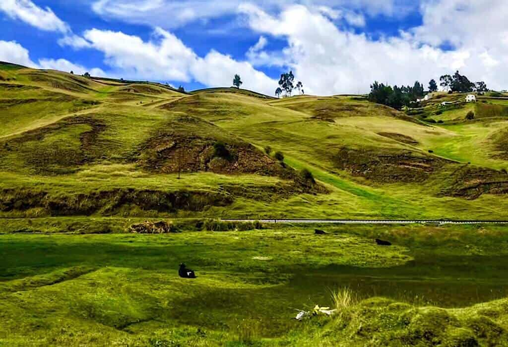 Countryside picture taken from the bus. Cow in a green hilly field Ecuador
