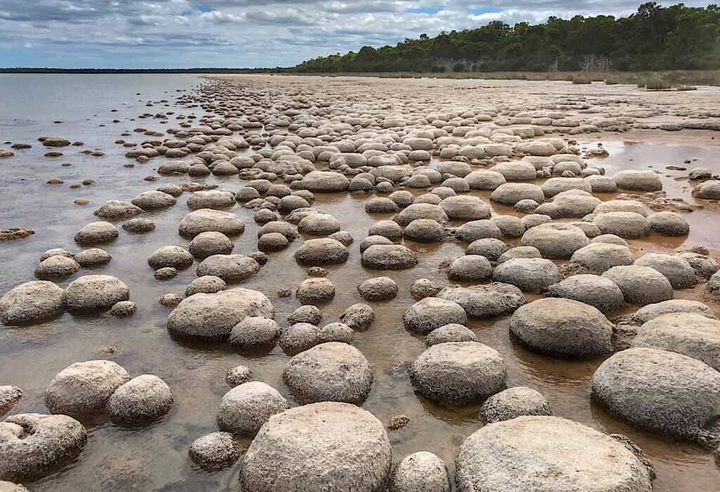 The shorline of Lake Clifton filled with Thrombolites