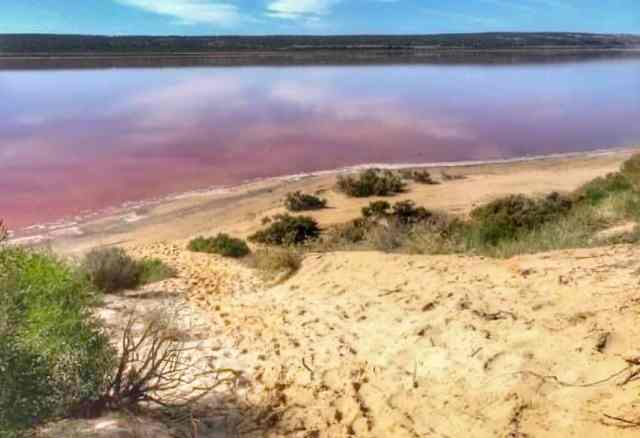 Pink water of the Hutt Lagoon