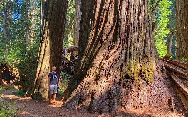 Trin standing by redwood trees in Jedediah Smith Redwood State Park
