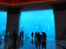 Denver Aquarium Restaurant