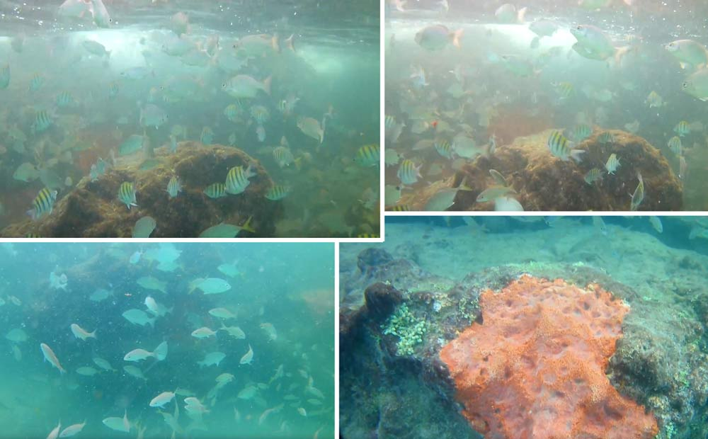 The Fish At Red Reef Park