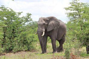 Weltreise_Backpacking_Afrika_Roadtrip_Botswana