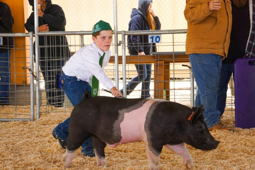Need Meat? SBC Fair Livestock Show & Auction Goes Virtual; Buyers Needed
