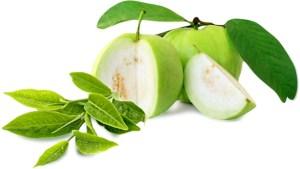 أوراق الجوافة العلاج السحري لمشاكل البشرة
