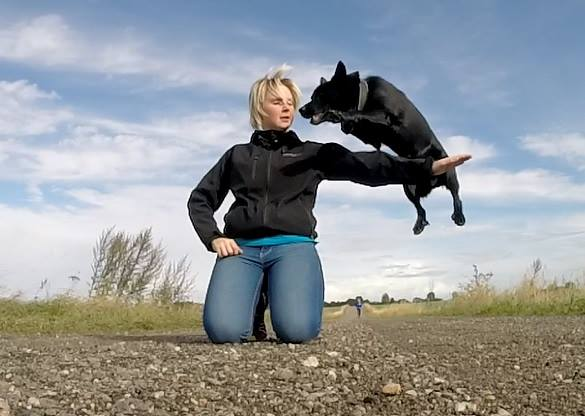 Dog trick where dog is jumping over arm
