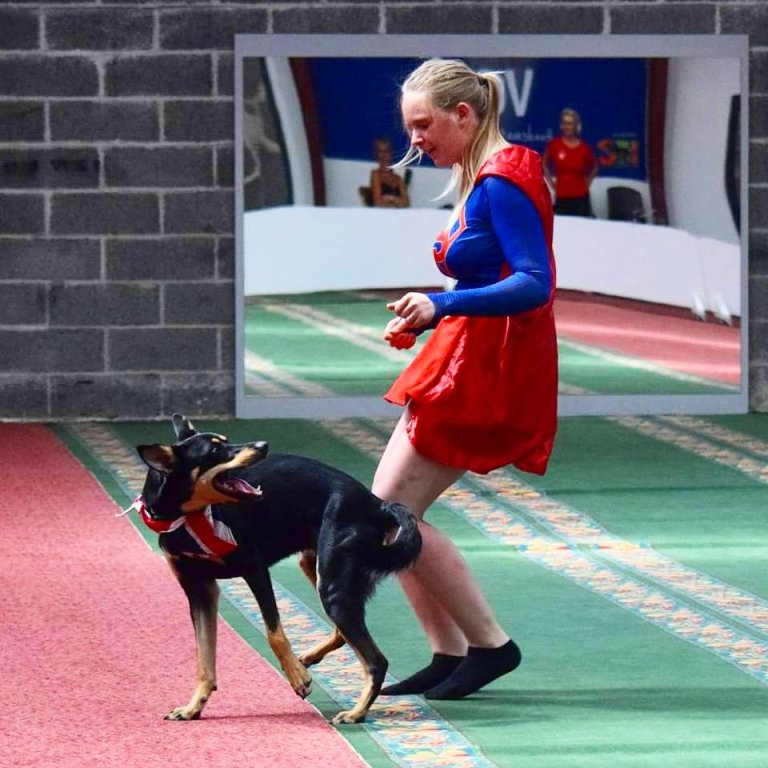 dog dancing with its owner while performing dog tricks