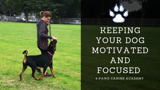 keeping your dog motivated and focused