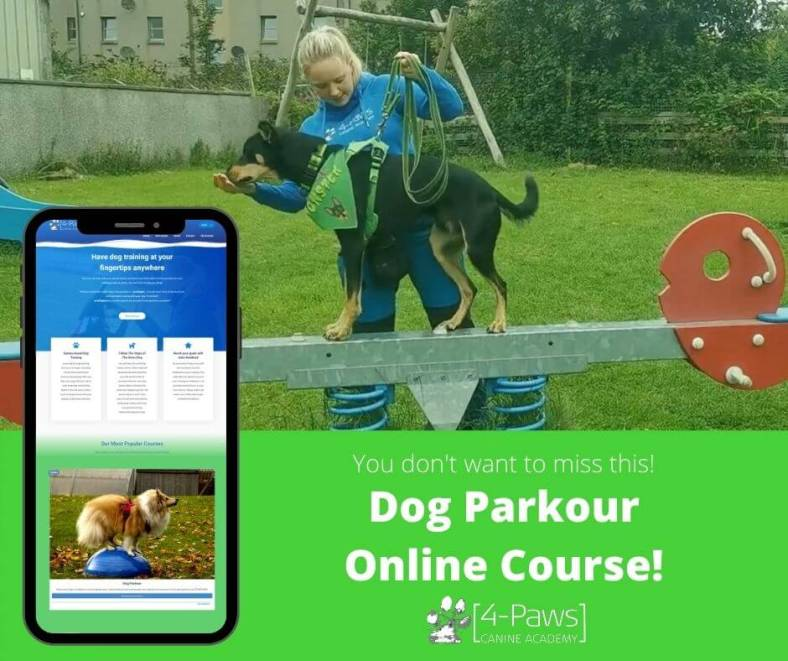online dog parkour course