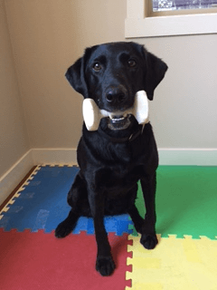 emma dog parkour