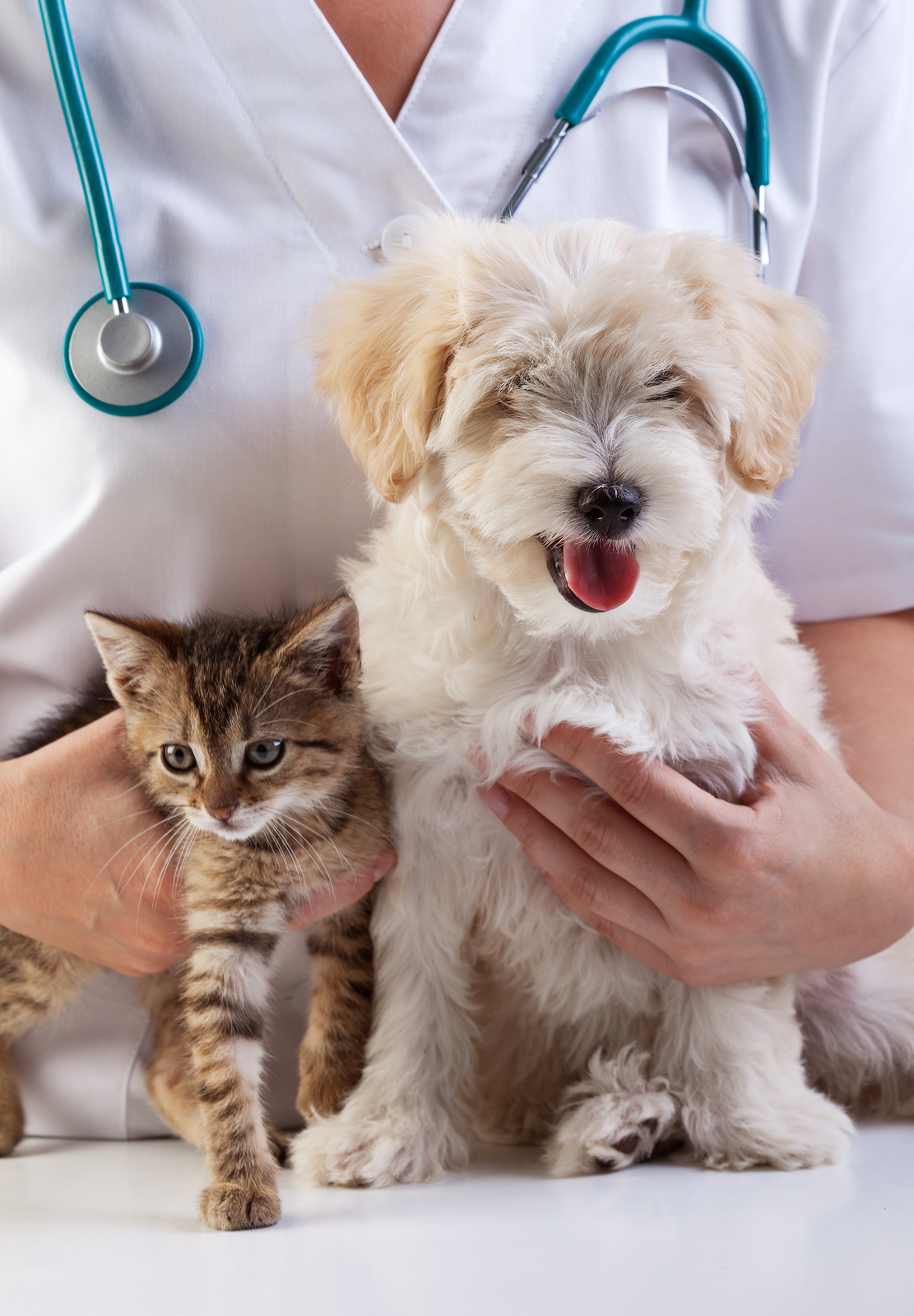 Your Pet Might Have Ringworm If