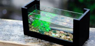 Fisch-Aquarium