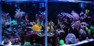 Modernes und beleuchtetes Aquarium