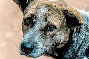 straßenhund auf kreta