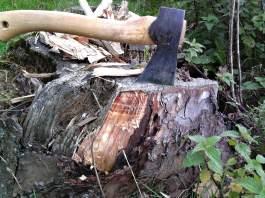 In einem Baumstumpf feststeckende Axt