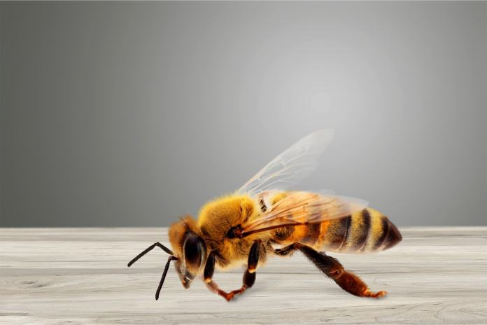Eine Biene