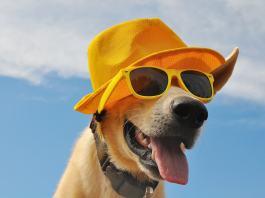 Hund auf Reisen