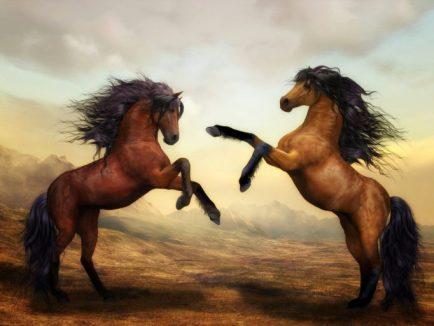 Zwei Pferde bei Sonnenaufgang