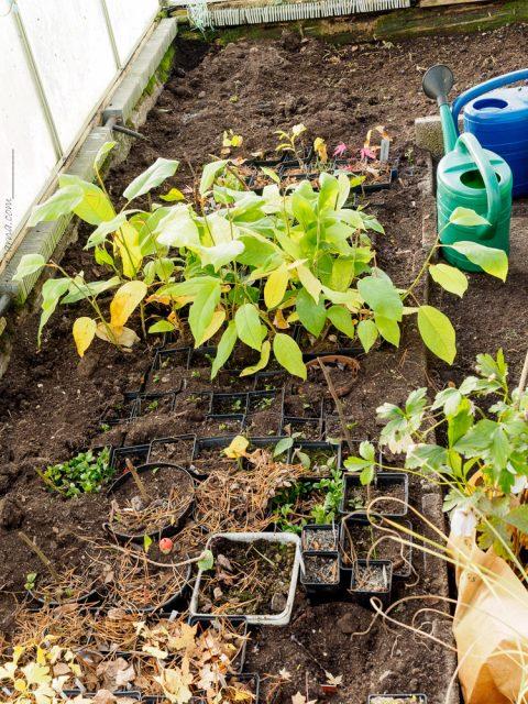 Ombonat i växthuset