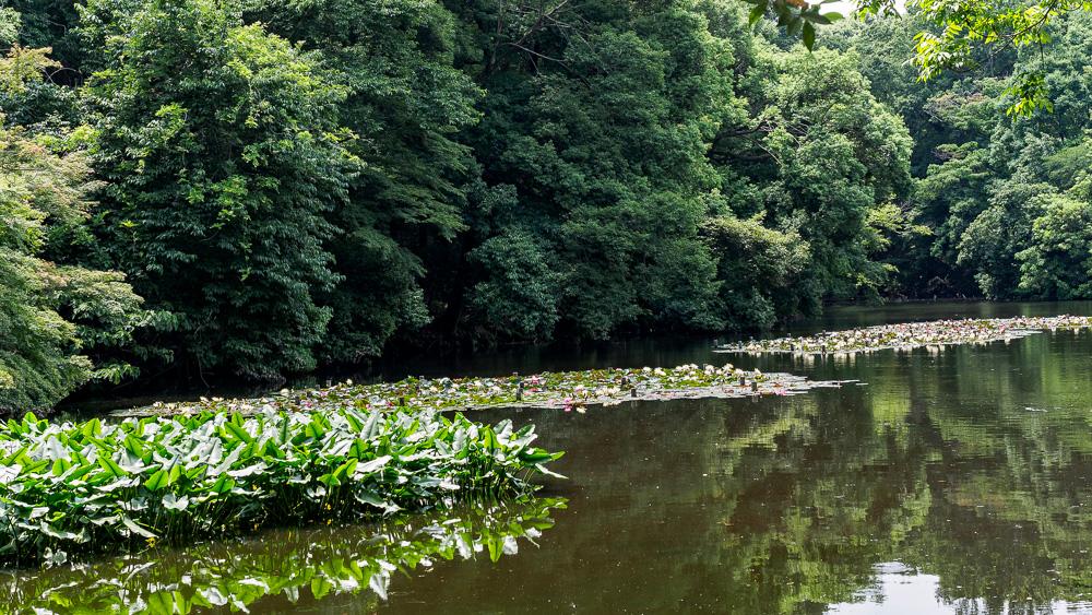 South pond, södra dammen