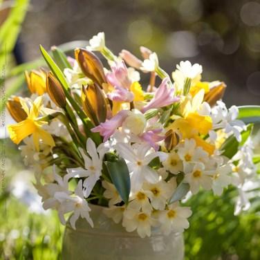 vårbukett, lökväxter