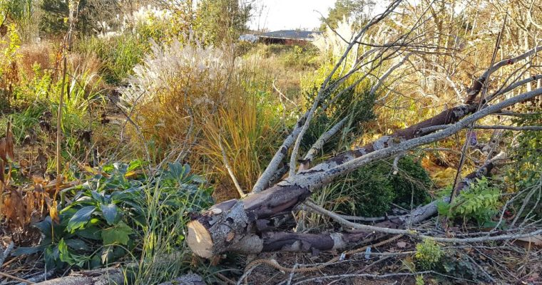Trädfällning och höstjobb